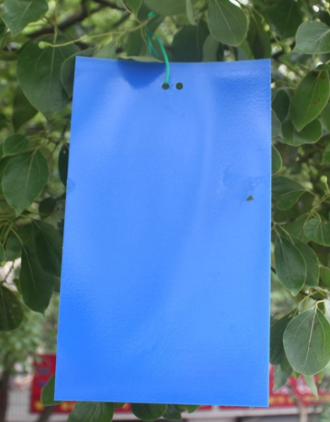 Blue Sticky trap